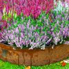 Corten gietrand planten